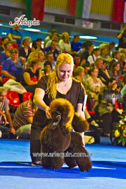 arlequin euro dog show bucharest 06.10